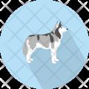 Wolf Carnivora Fur Icon