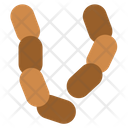 Worms Icon