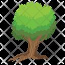 Wright Acacia Odorless Icon
