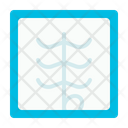 X Ray Medical Health Icon