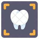 X Ray X Rays Tooth Icon
