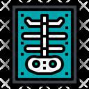 Bone X Ray Icon
