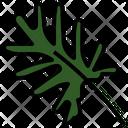 Xanadu Leaf Philodendron Icon