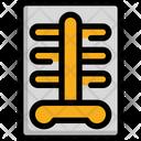 Xray X Ray Icon