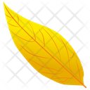 Yellow Birch Icon