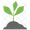 Young Plant Growing Plant Plant Life Icon