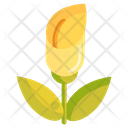 Zantedeschia Lily Arum Lily Icon