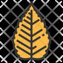 Zelkova Leaf Greenery Icon