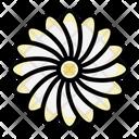 Zinnia Chrysanthemum Blossom Icon