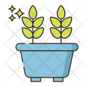Zz Plant Icon