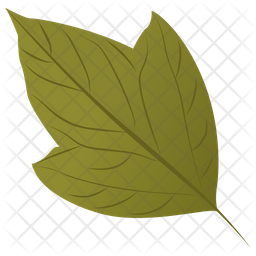 Acer Rubrum Icon