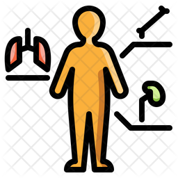 Anatomy Colored Outline Icon