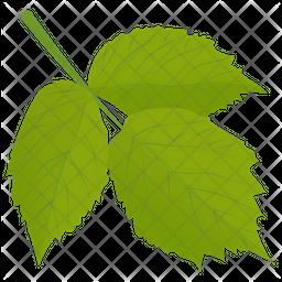 Aspen Leaves Icon