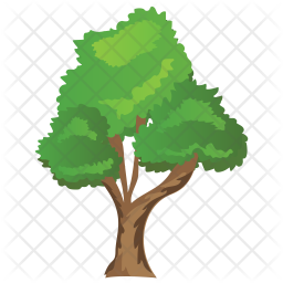 Bitternut Hickory Tree Icon
