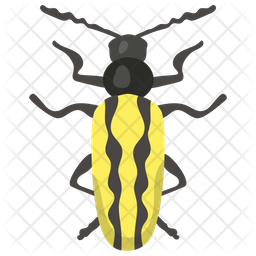 Blister Beetle Icon