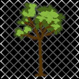 Brazil Nut Tree Icon