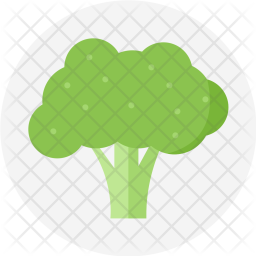 Broccoli, Green, Plant, Vegetable, Cabbage, Food, Spinach, Vegetarian Icon