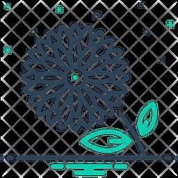 Chrysanthemum Line Icon