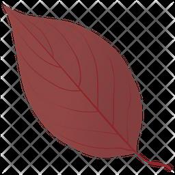 Dogwood In Fall Icon