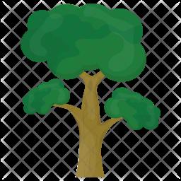 Eucalyptus Tree Icon