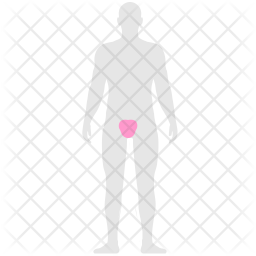 Genital pain Icon