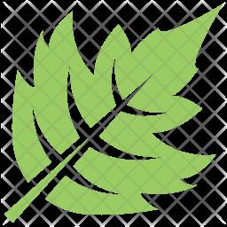 Hawthorn Leaf Icon