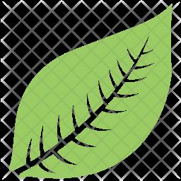 Hevea Brasiliensis Leaf Icon