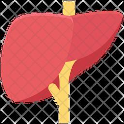 Human Liver Icon