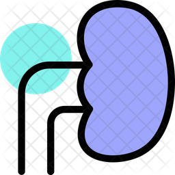 Kidney Colored Outline Icon