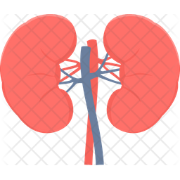 Kidneys Icon