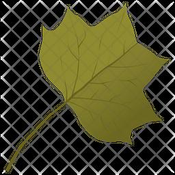 Liriodendron Tulipifera Icon