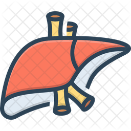 Liver Colored Outline Icon