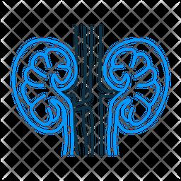 Nephrology Icon