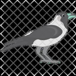 Pied Crow Flat Icon