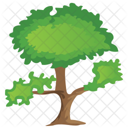 Pinus Bonsai Icon