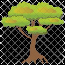 Pinus Bonsai Icon