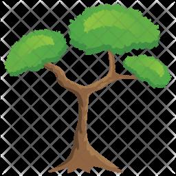 Pitch Pine Tree Icon