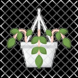 Pothos Icon