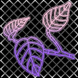Pothos Leaf Icon