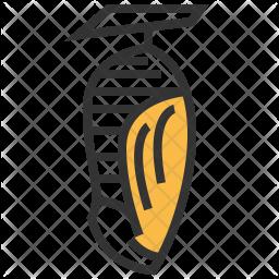 Pupa Icon