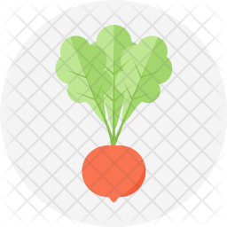 Radish, Salad, Cooking, Vegetable, Food, Crunchy Icon