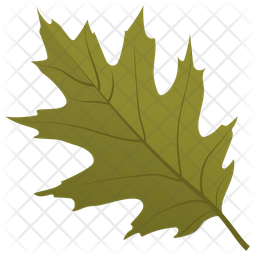Scarlet Oak Icon