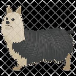 Shetland Sheepdog Icon