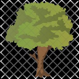 Sugar berry Tree Icon