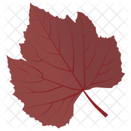 Sycamore Leaf Icon