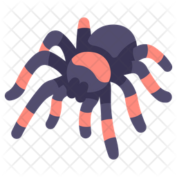 Tarantula Icon