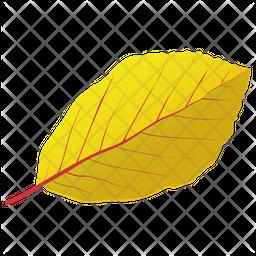 Yellow Birch Icon