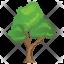 Bitternut Hickory Tree