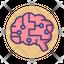 Brain Simulation