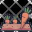 Carrot Plot